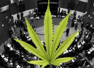 Aprueban uso de la mariguana