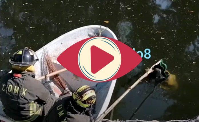 ladrón ahogado canal