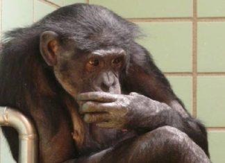 ¡NO MÁS SUFRIMIENTO¡ Senado prohíbe el uso de animales para pruebas de cosméticos