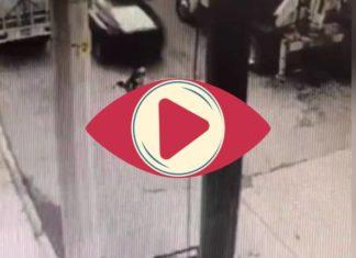 Policías arrollan intencionalmente a perrito Husky en Edomex